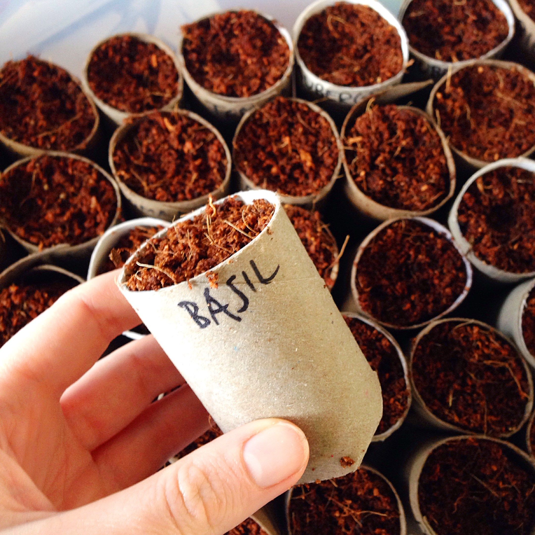Diy Biodegradable Pots: DIY - Biodegradable Toilet Roll Planters