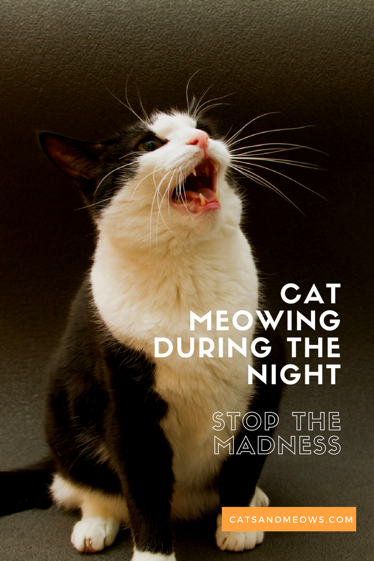 Cat Meowing During The Night Why And How To Stop The Behavior Cat Meowing At Night Cat Behavior Cat Training