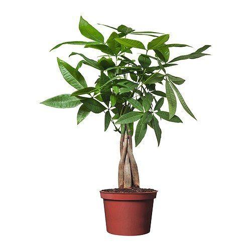 Ikea House Plants Canada