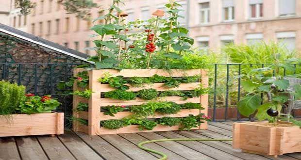 Vite on fait son mini jardin sur palette bois zen fils et marseille - Deco jardin en palette nice ...