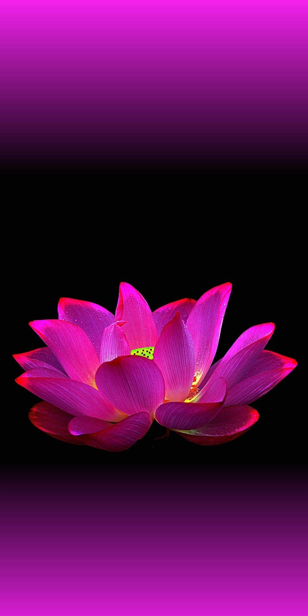 Lotus flower wallpaper ...