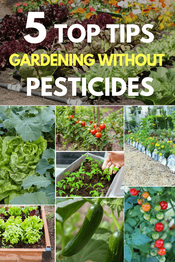 The Dead Soil Requires Increasing Doses Of Conventional Fertilizer And Still The Plants Are Maln Organic Vegetable Garden Gardening For Beginners Garden Pests