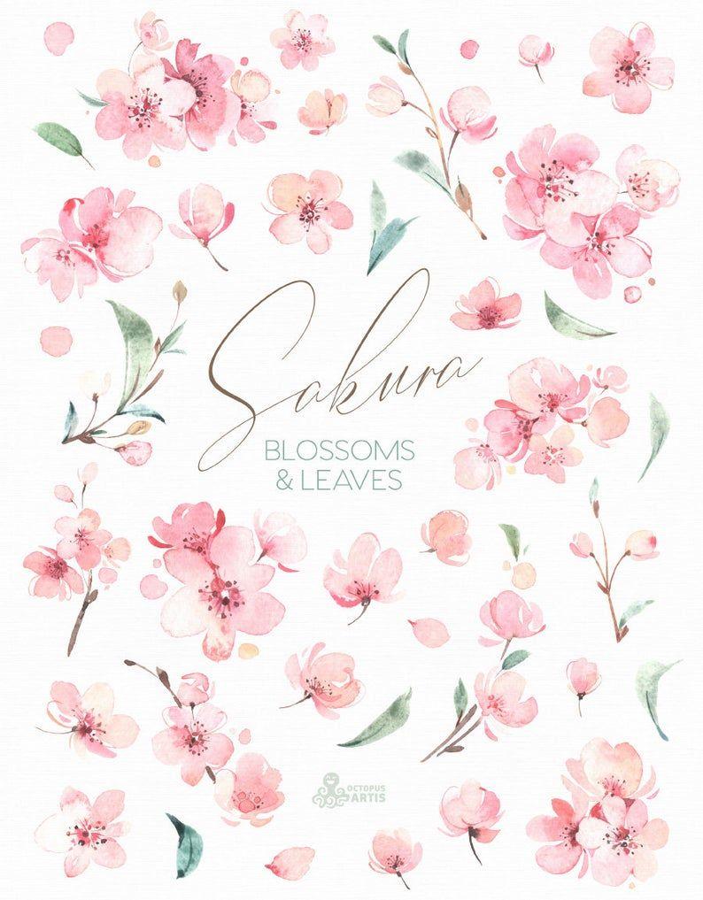 Sakura Blossoms Leaves Watercolor Floral Clipart Cherry Etsy Floral Watercolor Cherry Blossom Watercolor Flower Drawing