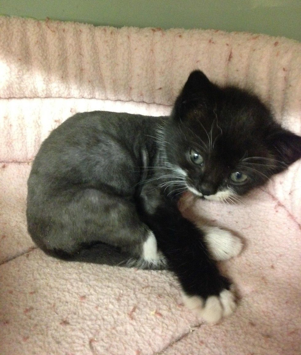 Kitten Rescued From Under A Car Has The Loudest Pipes Kitten Rescue Kitten Photos Kitten
