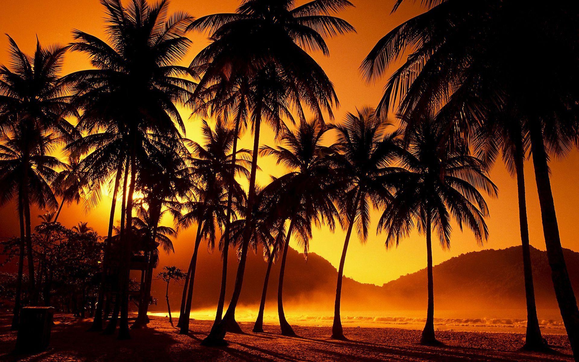 Palm Trees Beach HD desktop wallpaper High Definition