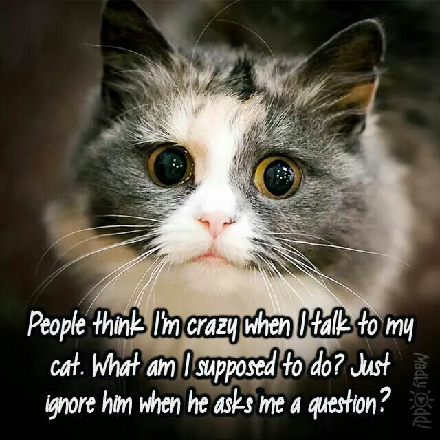 People think I'm crazy when I talk to my cat. What am I supposed to do? Just ignore him when he asks me a question? ?