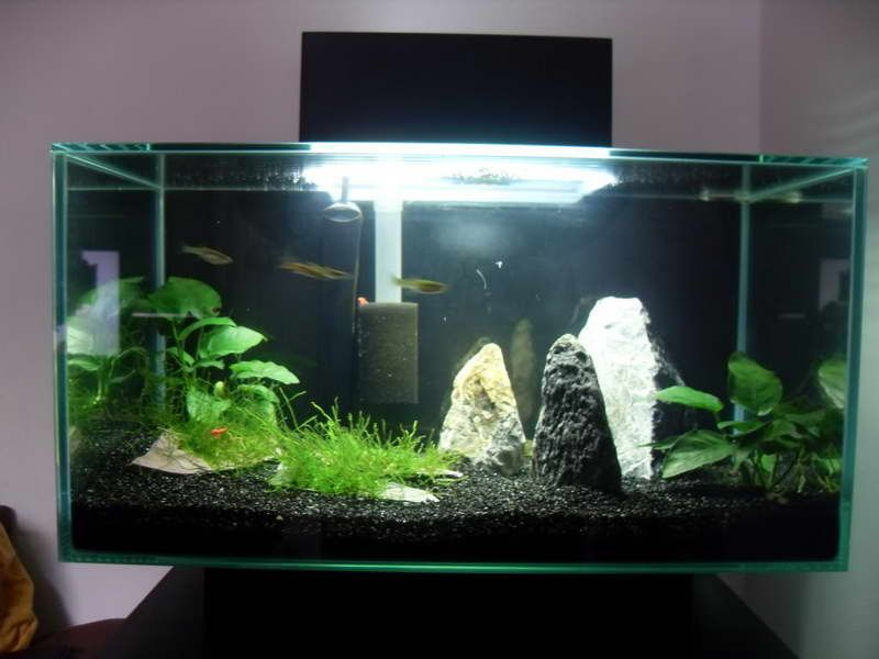 Top 10 diy aquarium ideas for your next aquarium project for Aquarium decoration diy