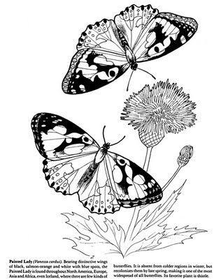 Pretty And Informative Butterfly Coloring Page Courtesy Dover