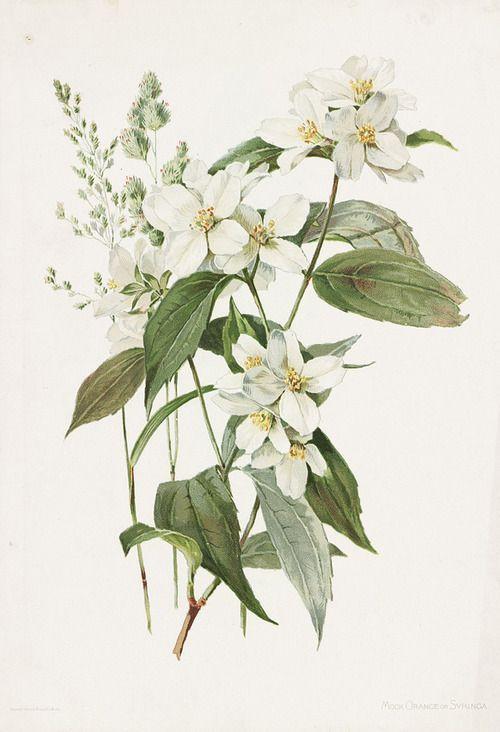 botanical prints and books