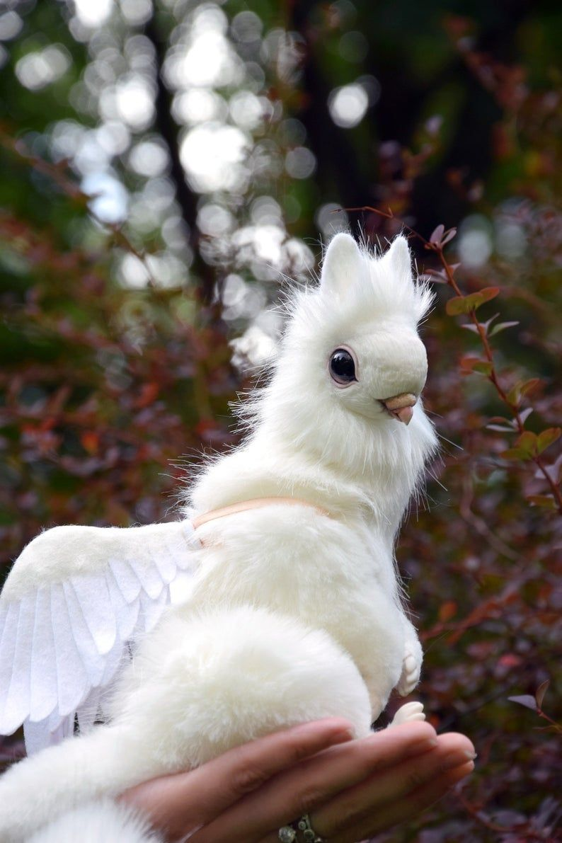 Dove Griffin Etsy Animals, Ragdoll cat, Cat today