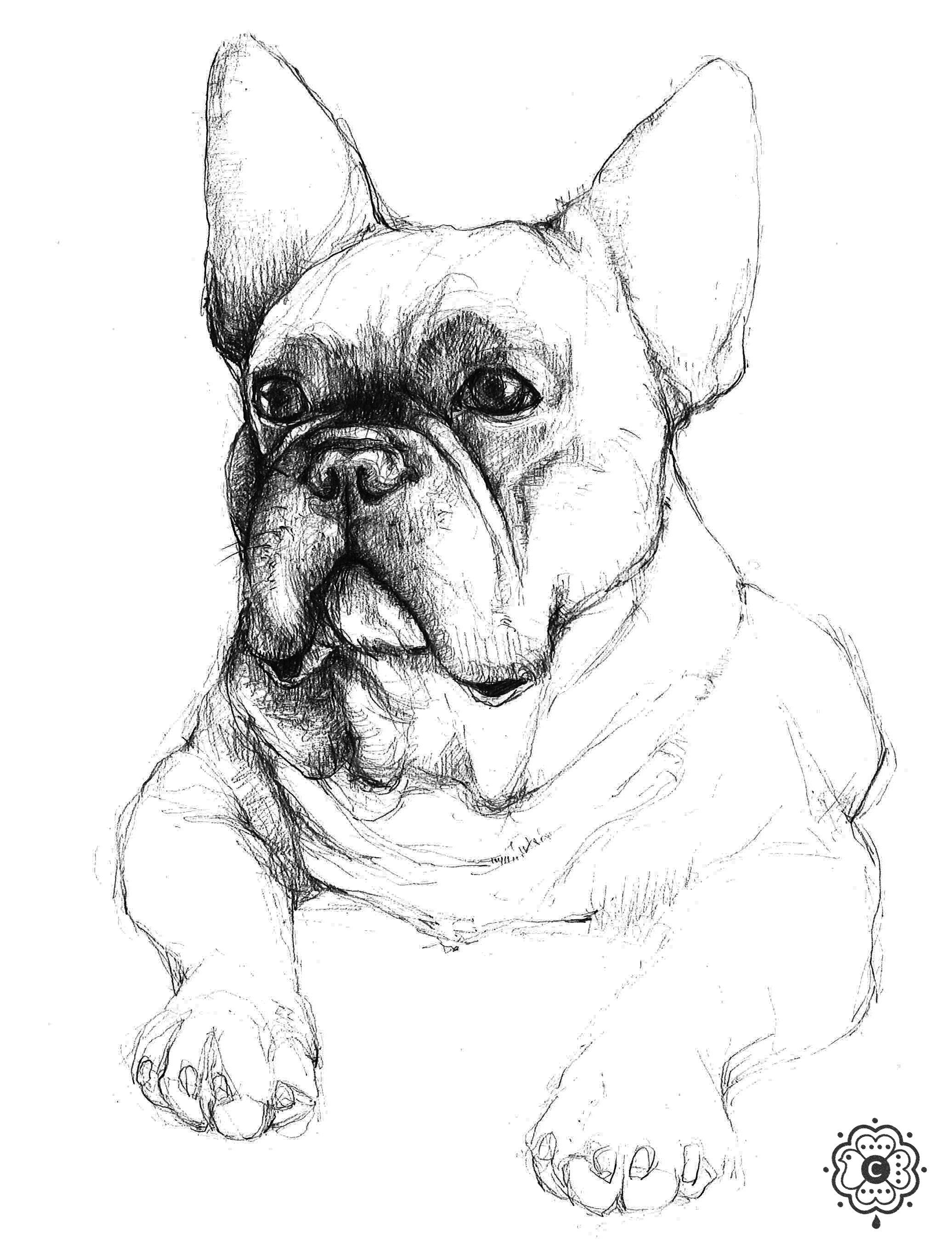 French Bulldog Clemence Thienpont Hond Tekeningen Franse Buldog Dieren