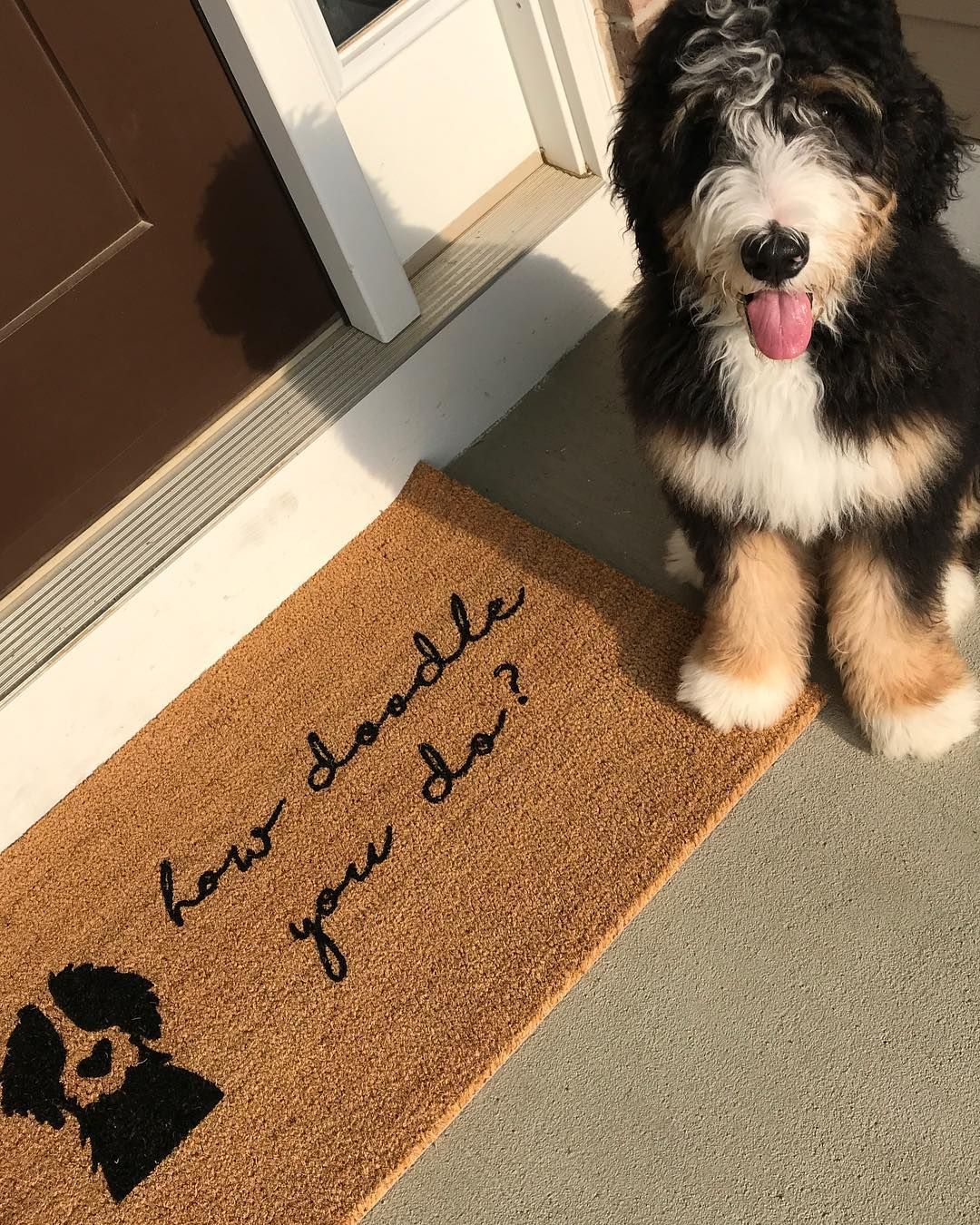 Bernedoodle Bernedoodle Puppy Mountain Dogs Dog Love