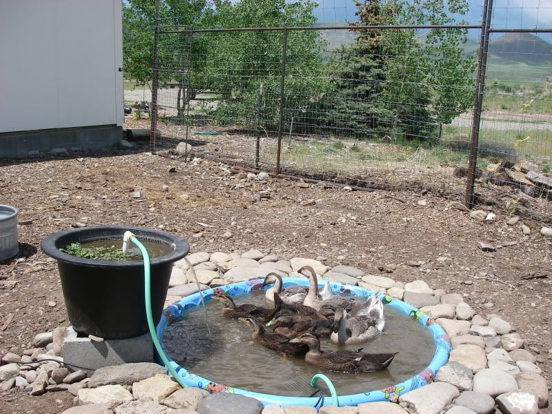 Biological filtered duck pond ducks pinterest duck for Biological pond filter