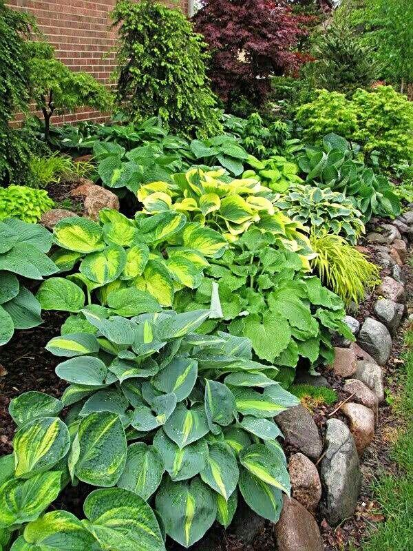 pin johna sanders garden