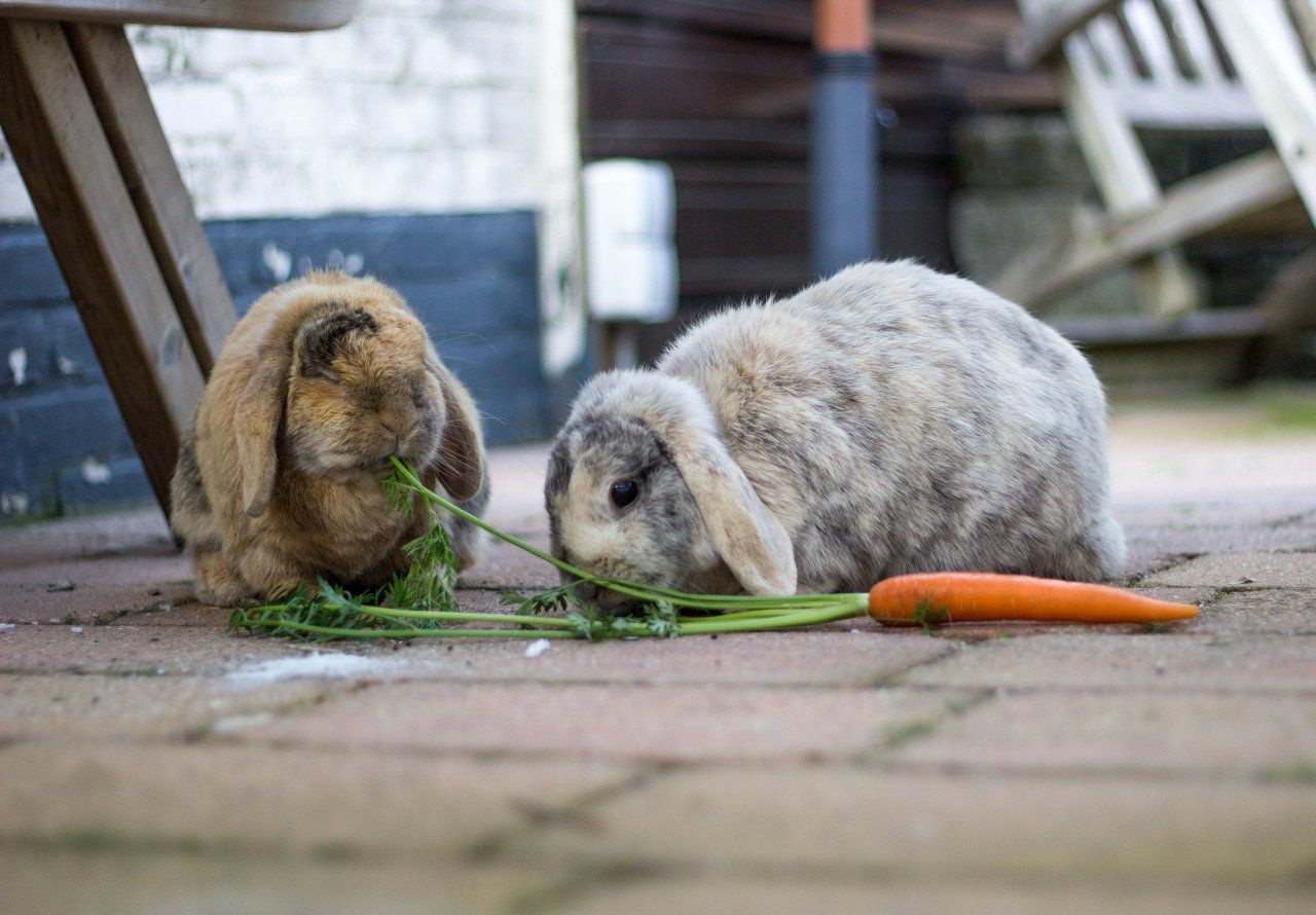 The Daily Cute: Hungry for the Weekend