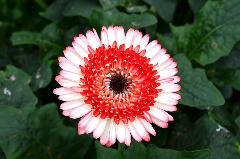 In Search Of The Perfect Gerbera Daisy At Ever Bloom Farms In California Gerbera Daisy Gerbera Flowers Photography
