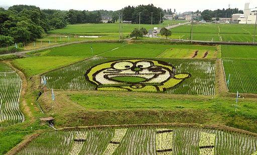 Doraemon Rice Paddy