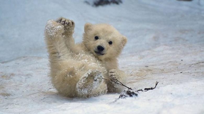 Kışın Kötü Şartlarına Maruz Kalmış Komik ve Şaşkın 20 Hayvan