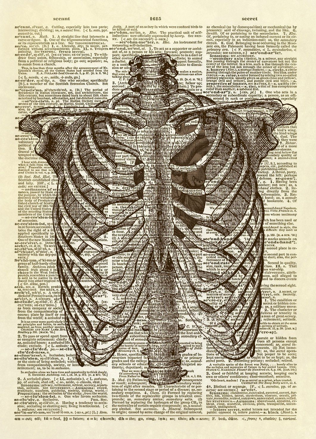 Human Rib Cage with Heart Dictionary Art Print | Human ribs, Rib ...