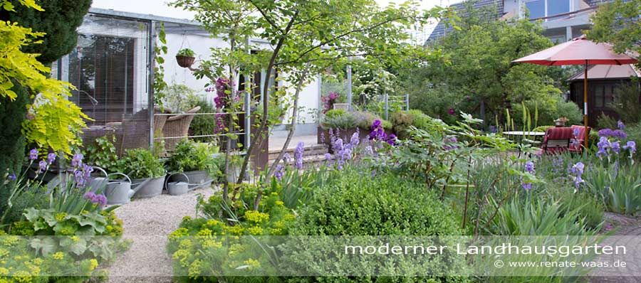 Great Modern Cottage Garden Amelanchier, Alchemille Mollis, Iris