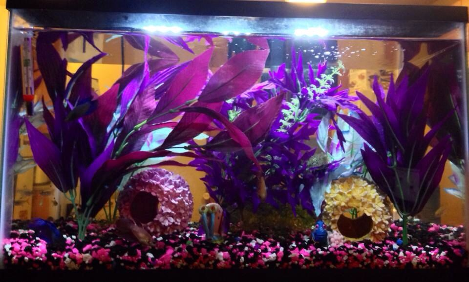10 gallon tank not all tanks have to have a natural for Betta fish tanks petco