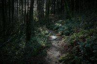 ● forest brume | VK
