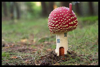 I love toadstools.  Have quite a few scattered around my garden.  But this schroom is awesome.  WANT!