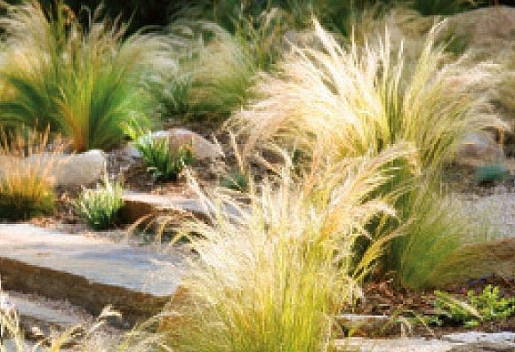 Feel free: Landscaping with ornamental