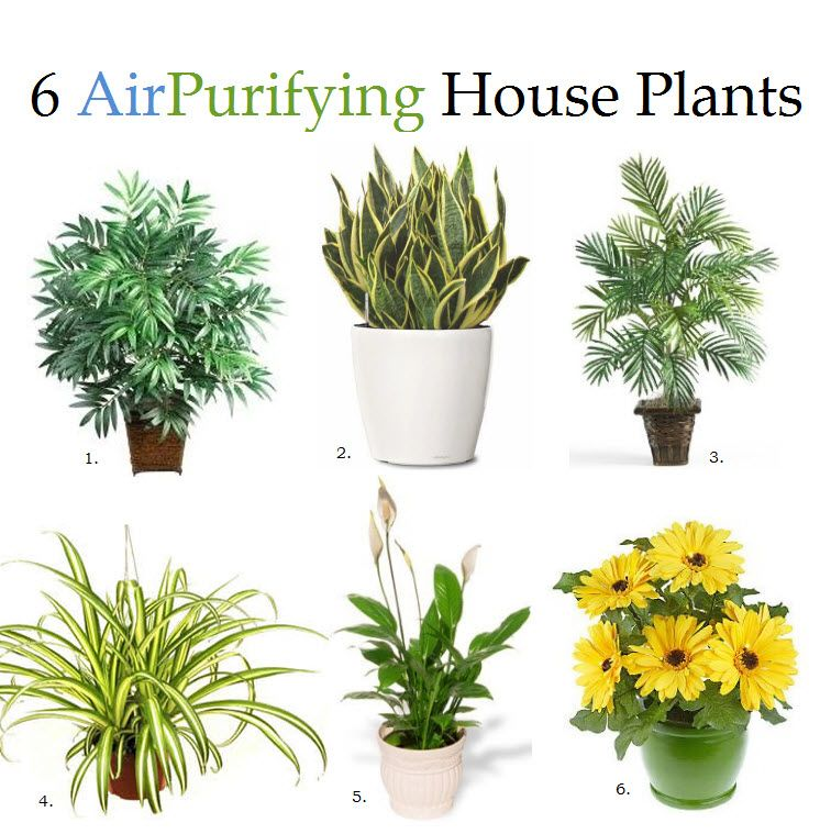 6 House Plants That Improve Air Quality According to NASA:    1. Bamboo Palm  2. Snake Plant  3. Areca Palm  4. Spider Plant  5. Peace Lily  6. Gerbera Daisy    I've got 2 of the 6...