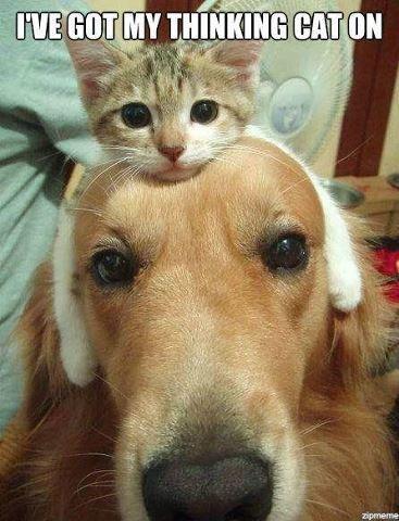 I've got my thinking,...cat on (?)