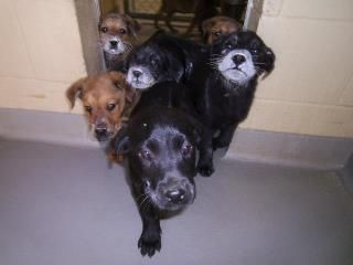 This Pet Is Located At Columbus Ga Animal Care Control Center