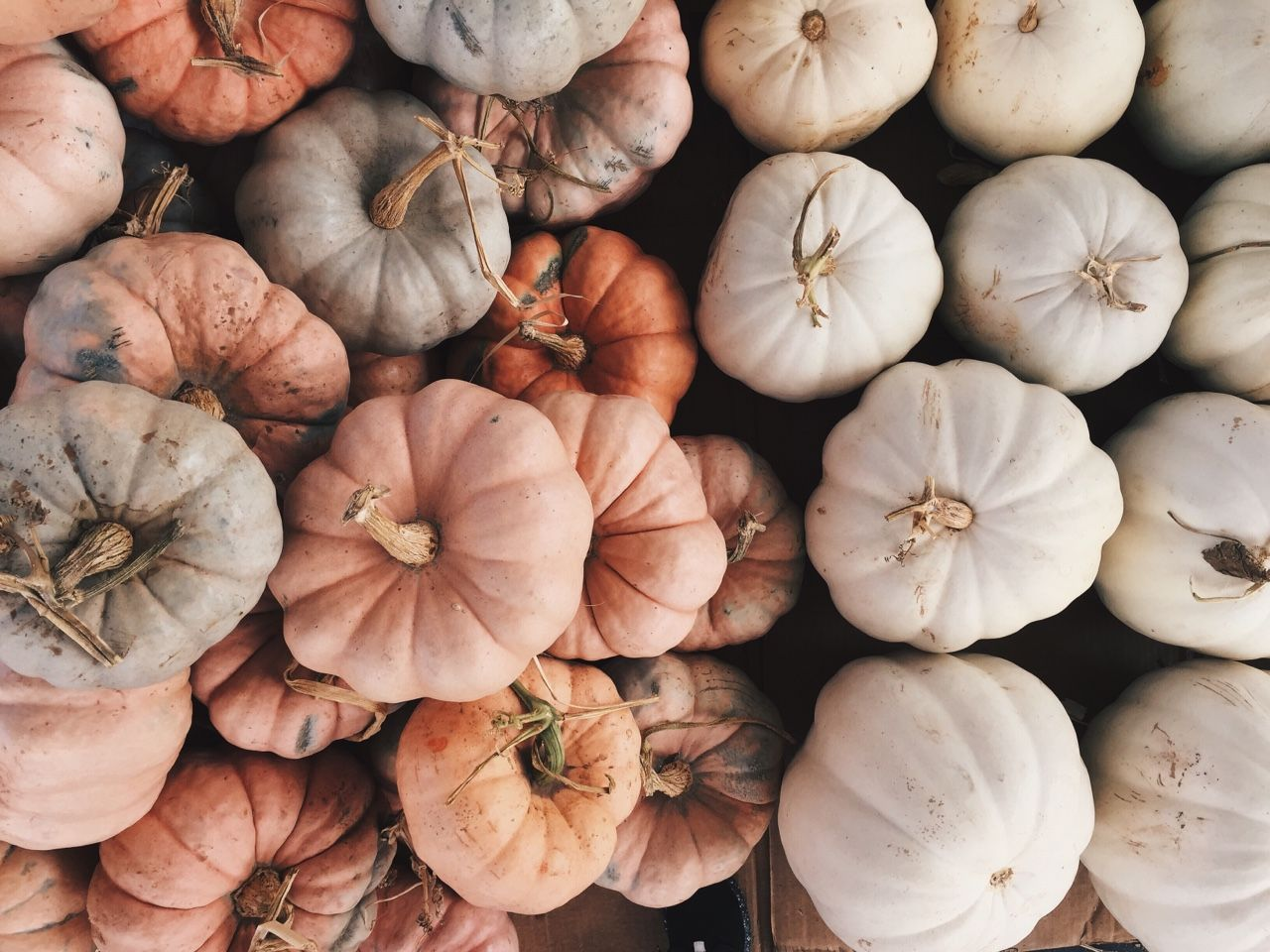 macadameia Autumn aesthetic, Fall inspo, Autumn inspiration