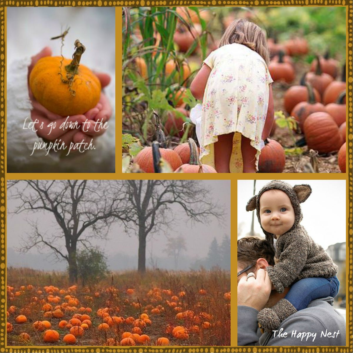 Let's go down to the pumpkin patch.