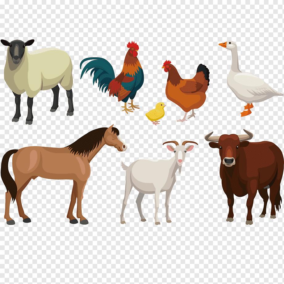 Ilustrasi Berbagai Macam Hewan Live Domba Kambing Sapi Ilustrasi Hewan Ternak Kuda Lainnya Binatang Menyusui Png Ilustrasi Hewan Kuda Binatang