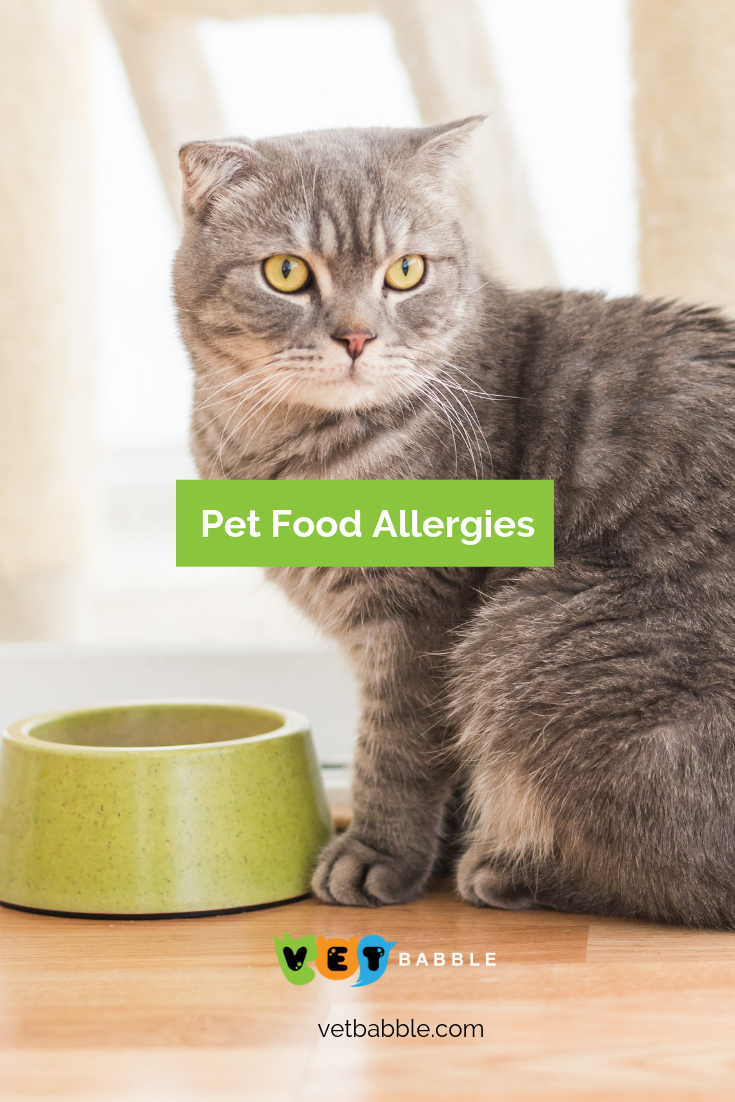 Pet Food Allergies Symptoms And Treatments Food Allergies Food Allergy Symptoms Allergies
