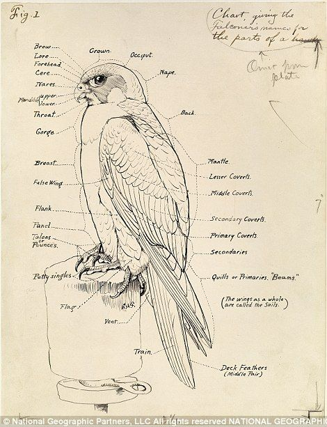 take a journey through 128 years of national geographic illustrations |  national geographic, animal infographic, scientific illustration  pinterest