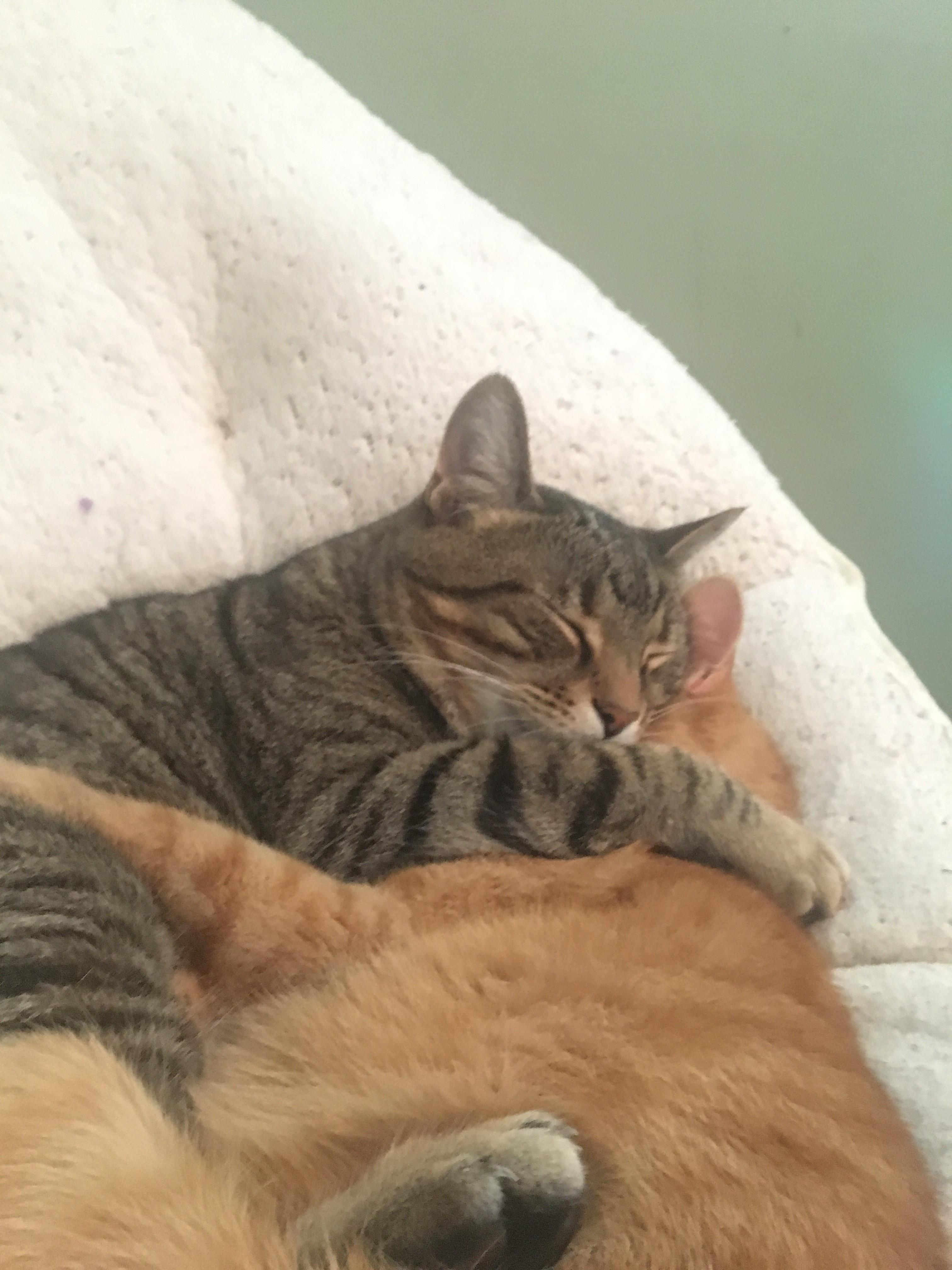 My Cats Sleeping Together Https Ift Tt 2geyveq Cat Sleeping