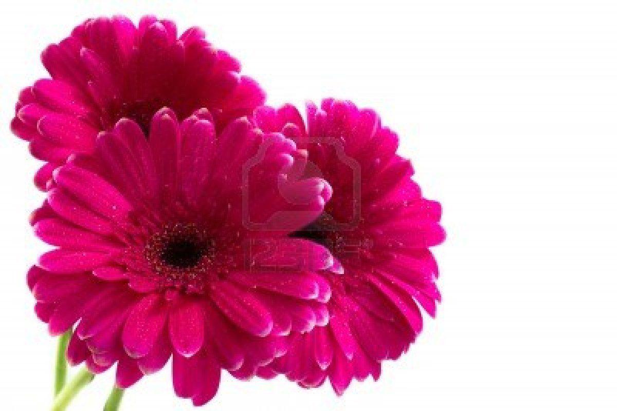 Color Fucsia - Fuchsia!!! Flowers | Color Fuchsia - Fucsia ...
