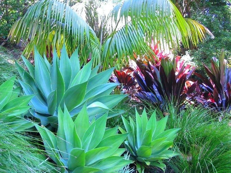 Tropical Landscape Design Tropical Plant Garden Ideas Tropical ...
