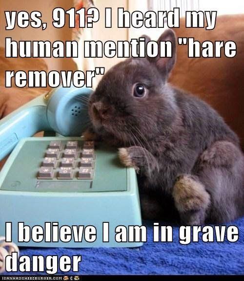 Bunny Memes Funny Rabbit Cute Funny Animals Funny Bunnies