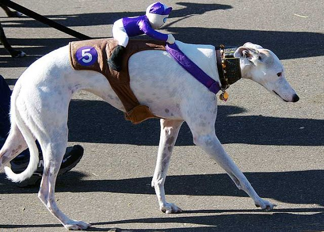 Greyhound Halloween Costume & Greyhound Halloween Costume | Fast Friends | Pinterest | Halloween ...