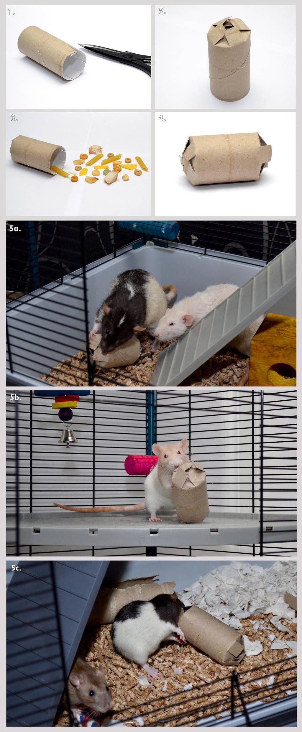 Making A Treat Box Toy By Ladytara In 2020 Diy Rat Toys Rat Toys Pet Toys