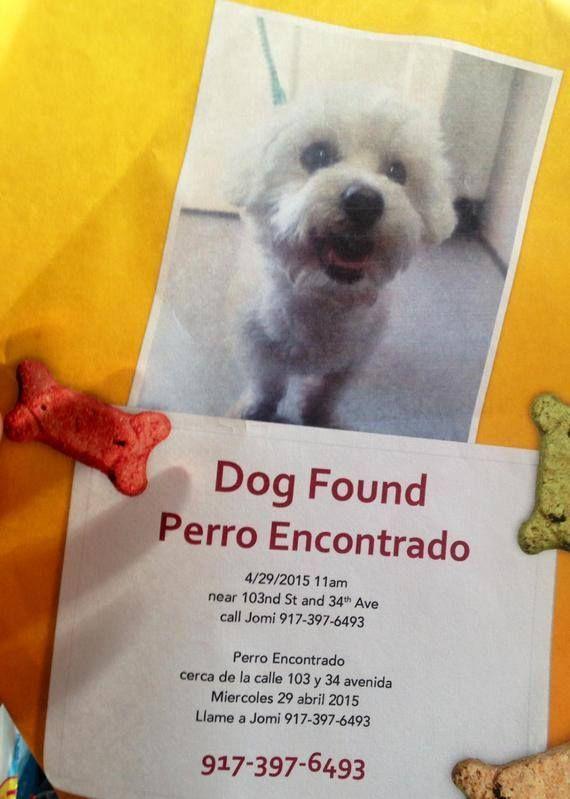 Elizabeth Florio Campanella Queens Lost Found Pets April 29