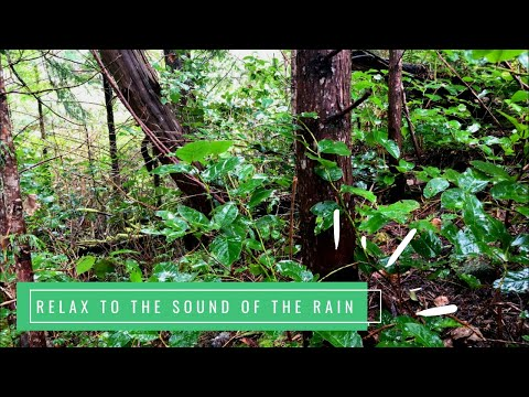 Raindrops Falling On Leaves In The Forest Relaxing Nature White Noise Rain Sounds No Thunder Youtube Sound Of Rain White Noise Forest Sounds