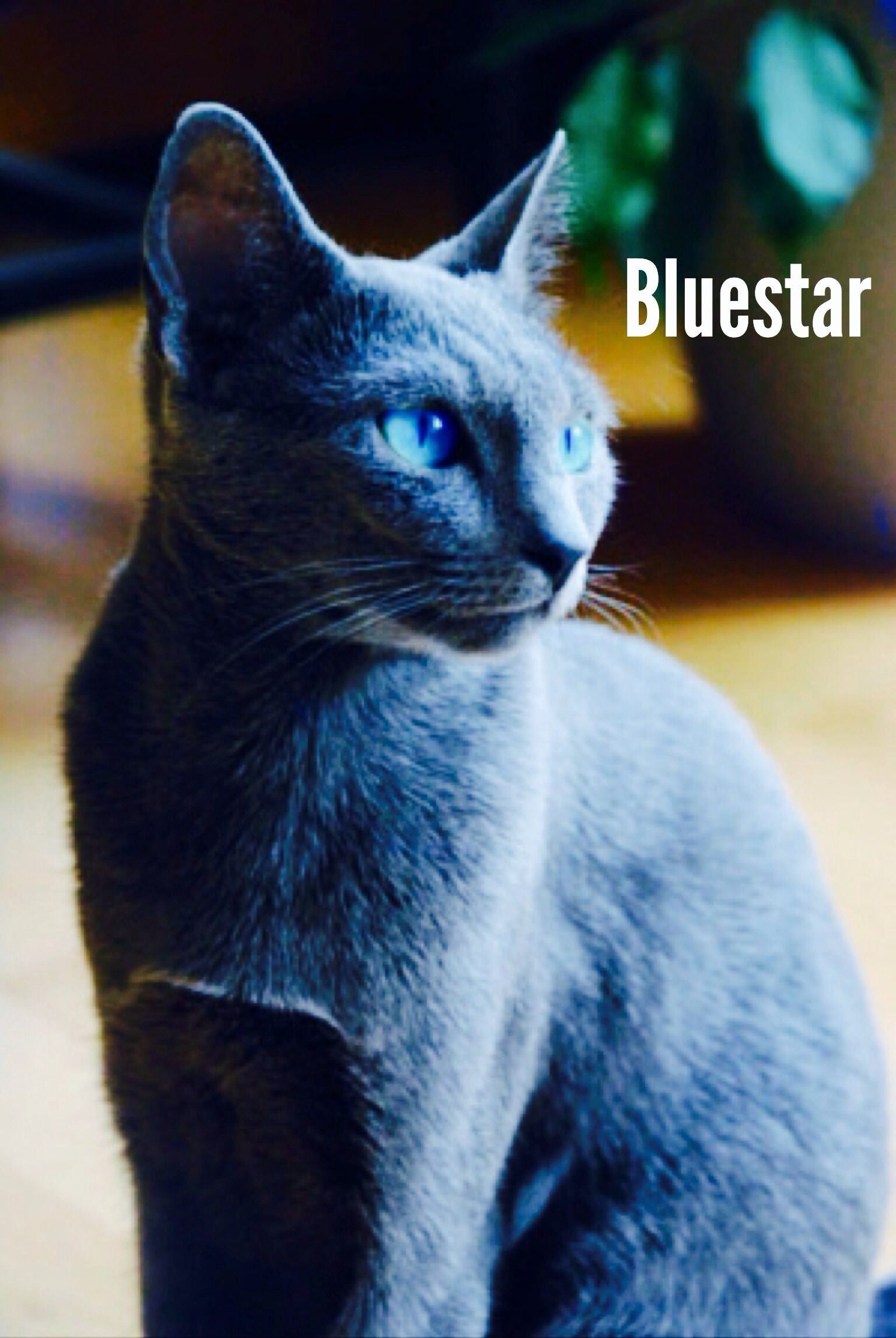 Bluestar Mate to Oakheart and mother of Stonefur