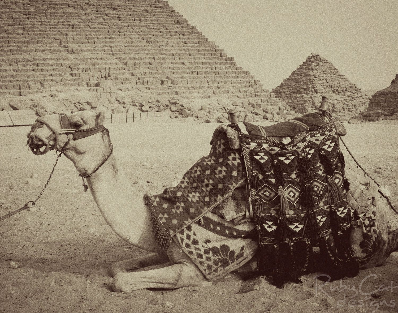 11x14 Print  Camel / Black & White by RubyCatDesigns on Etsy, $14.00