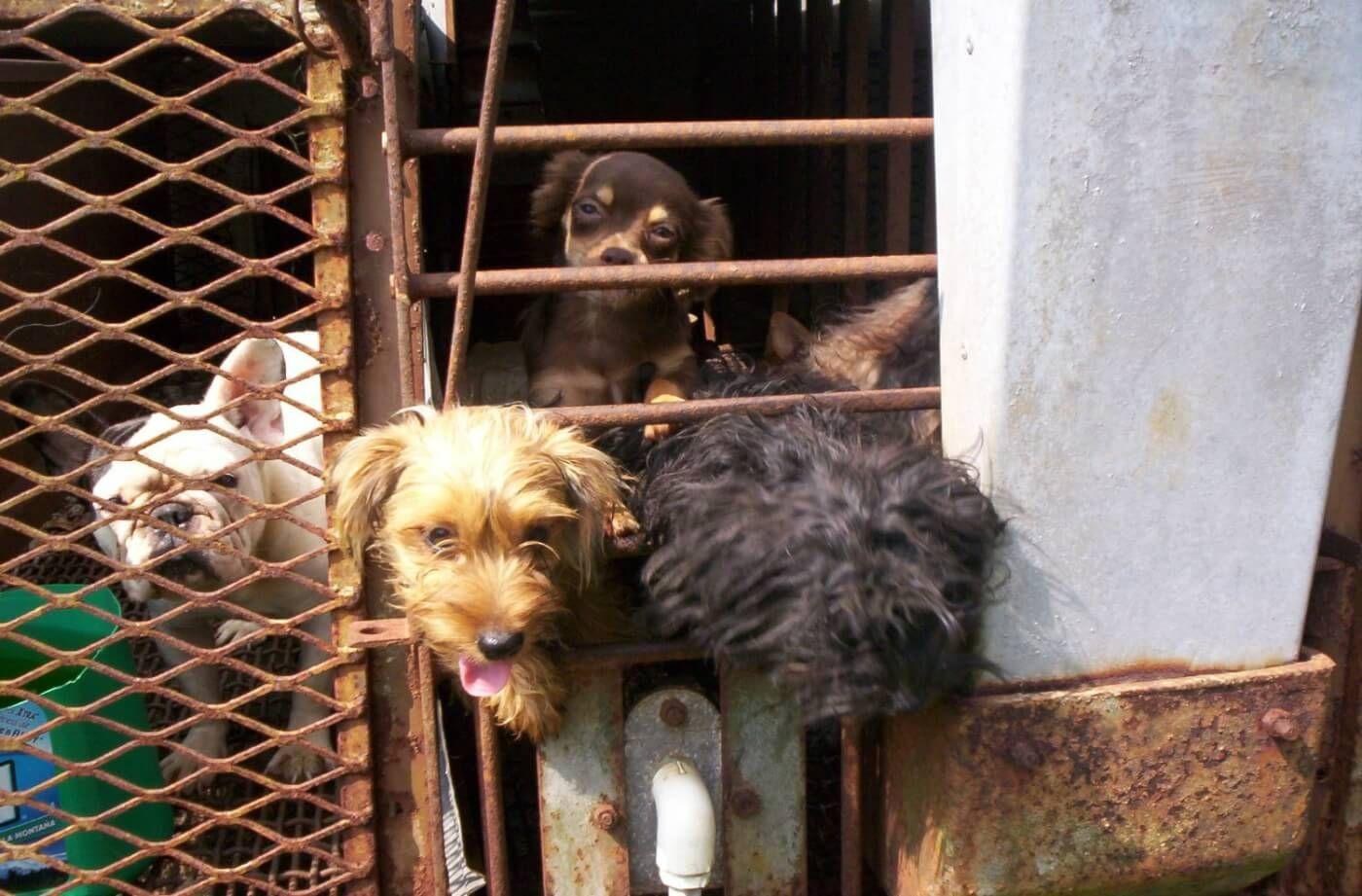 MultimillionDollar 'Puppy Mill Rescue' Fined 15,000