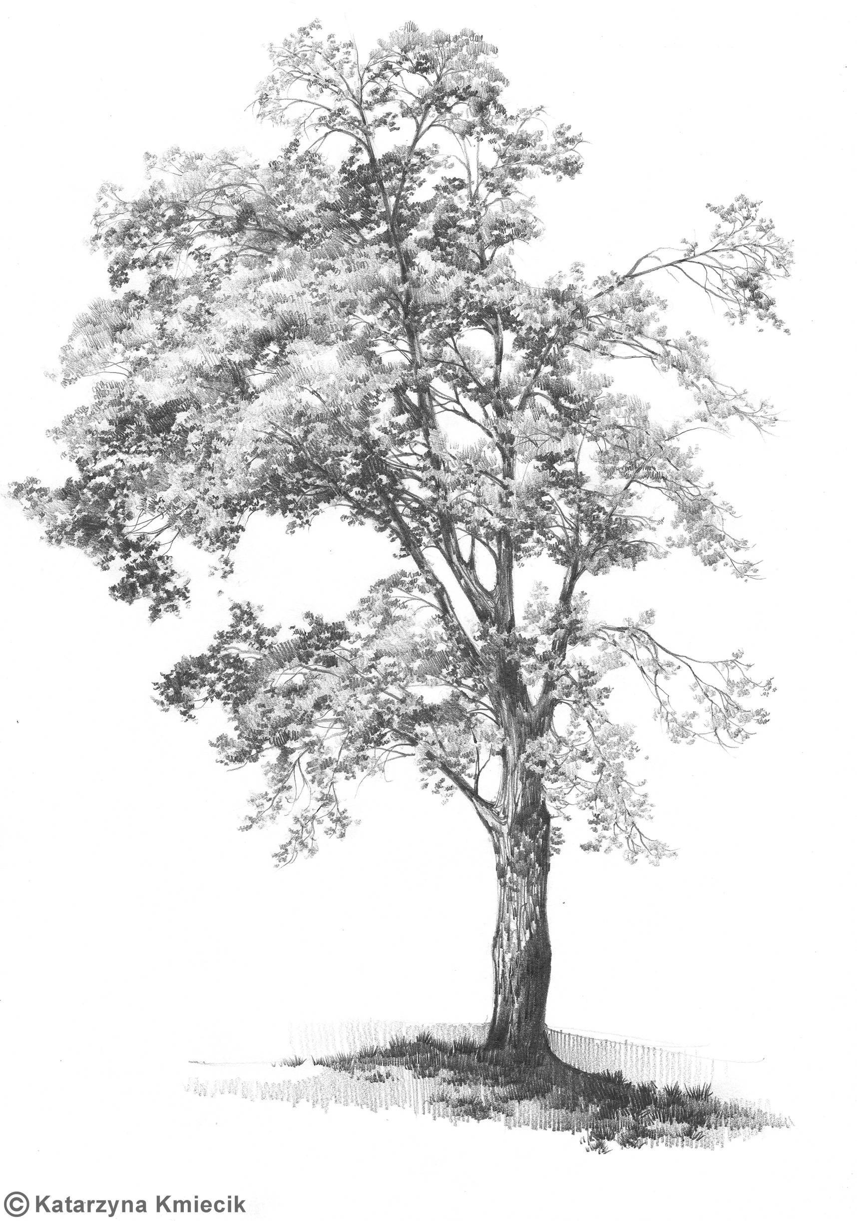 Realistic Tree Sketch
