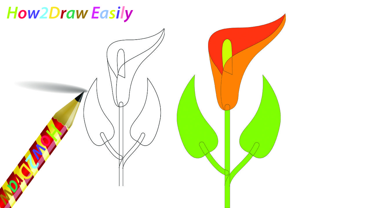 Calla Lily Flower Drawing Coloring Lily