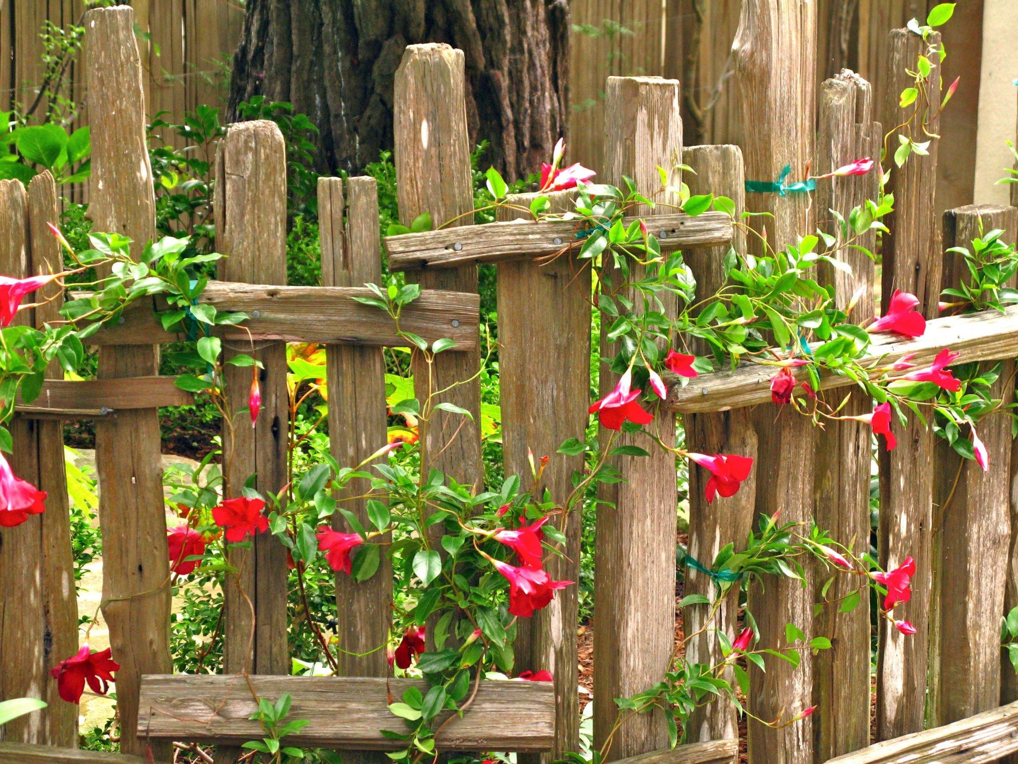 rustic cottage fence gardening inside and out ❀
